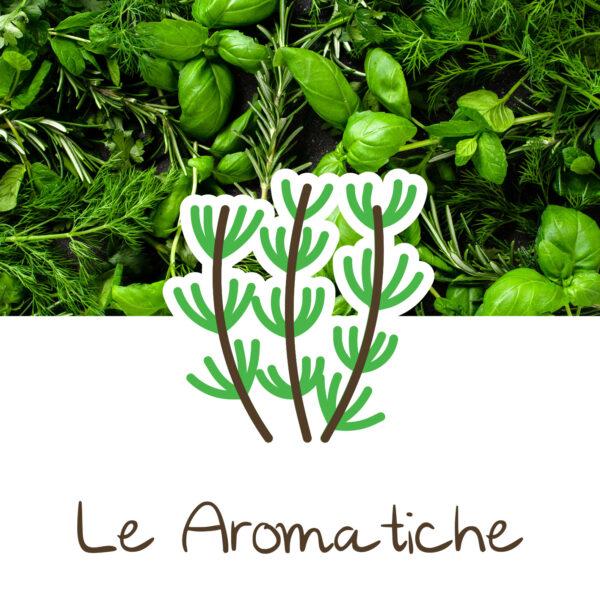 coltivare piante aromatiche_ortinmente