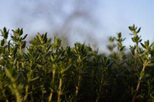 ortinmente_coltivare orto in vaso