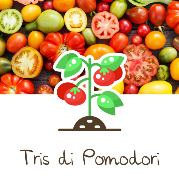 coltivare pomodori in vaso_ortinbox