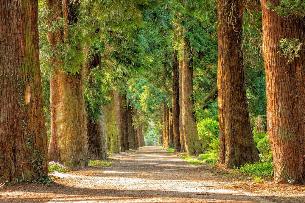 avenue, trees, tree lined